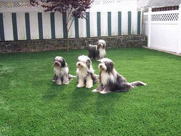 Artificial Grass Photos: Fake Pet Turf Plandome Heights New York for Dogs  Front Yard