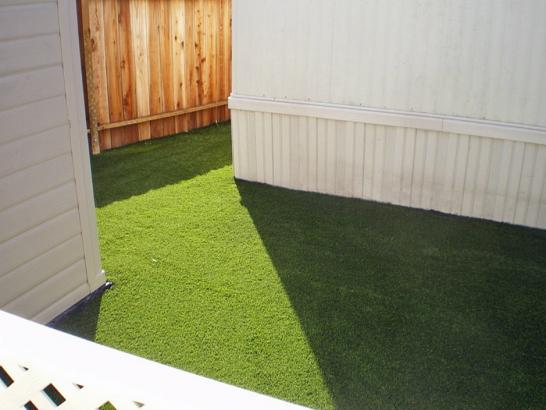 Artificial Grass Photos: Synthetic Animal Shelter West Haverstraw New York Installation
