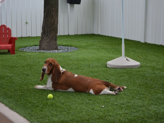 Artificial Grass Photos: Synthetic Turf Supplier Tillson, New York Dog Parks, Dogs Park