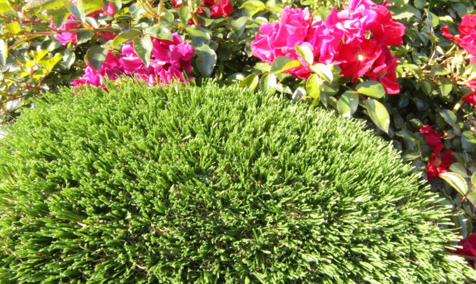 Hollow Blade-73 syntheticgrass Artificial Grass New York NY