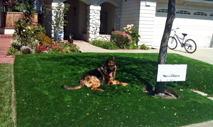 Pet Grass, Artificial Grass For Dogs in New York